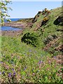 NO5515 : Bluebells and Red Campion on Fife Coast Path by Becky Williamson