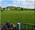 SN5847 : Cows in a Ceredigion field viewed from Carmarthenshire by Jaggery