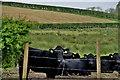 H5166 : Calves, Dervaghroy by Kenneth  Allen