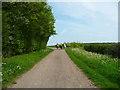 TL1026 : Wardswood Lane passing Ward's Wood, Lilley by Humphrey Bolton
