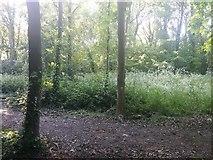 TQ2087 : Woods by Woodfield Park, Kingsbury by David Howard