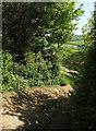 SX7248 : Foot of green lane near Cloverwell Farm by Derek Harper