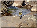 NY7535 : Grey Wagtail by the River South Tyne by Oliver Dixon