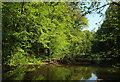 SX7249 : Avon at Woodleigh Wood by Derek Harper