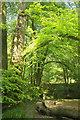 SX7349 : By the Avon, Silveridge Wood by Derek Harper