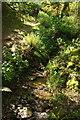 SX7248 : Stream and path below Reads Farm by Derek Harper