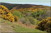 NC9410 : Looking into the Depths of Glen Loth by Chris Heaton
