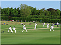 SZ5087 : Newclose County Cricket Ground: out lbw by John Sutton