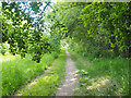 TL9396 : Pingo trail from car park by David Pashley