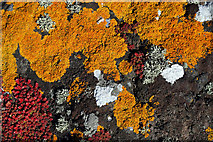 NS2007 : Lichen-covered rocks at Cross Ports by Walter Baxter