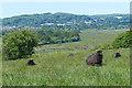 SZ6387 : View across Brading Marshes by Robin Drayton