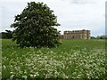 SO8844 : Cow parsley in Croome Park by Philip Halling