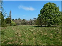 NS3977 : Grassland in the industrial estate by Lairich Rig