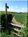 SO9047 : Footpath in Wadborough by Philip Halling