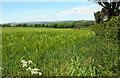 SX7957 : Barley, Luscombe Cross by Derek Harper