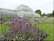 TQ1876 : The Palm House at Kew Gardens by Rod Allday