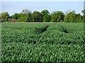 NZ3111 : Farmland, Hurworth by Andrew Smith