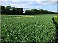NZ3309 : Farmland, Neasham by Andrew Smith