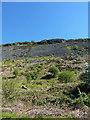 SJ0426 : Very steep hillside below Craig Rhiwarth by Richard Law