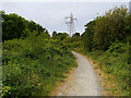 SD4158 : Path in Middleton Wood by David Dixon