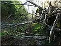 SE0908 : Fallen tree, Rams Clough, Meltham by Humphrey Bolton