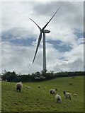 SE9238 : Sheep below a wind turbine by Graham Hogg