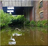 SE1437 : Leeds & Liverpool Canal, Shipley by michael ely