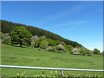 SJ0233 : Fields to the east side of Cwm Pennant by Richard Law