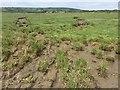 SN4005 : Gwendraeth mud flats by Alan Hughes