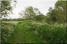 SP2195 : Path by the River Tame by Bill Boaden