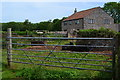ST5645 : Cows sitting in the shade at Tor Farm by David Martin