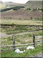 NN2529 : Litter in Glen Lochy by M J Richardson