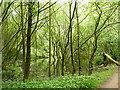 SJ5272 : Pond in Delamere Forest by Stephen Craven