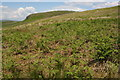 SD9656 : Bracken moor on Flasby Fell by Roger Templeman