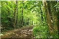 ST0101 : Track, Paradise Copse by Derek Harper