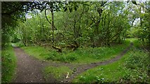 NS4760 : The former site of Craigielinn House by Lairich Rig