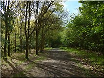 NS4760 : Path in Glen Park by Lairich Rig