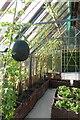 SE2754 : Inside a greenhouse by DS Pugh