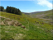 SJ0535 : Grassy singletrack in the Clochnant valley by Richard Law