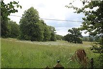 ST5071 : Trees in meadow, Tyntesfield Estate by M J Roscoe