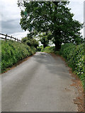 SJ4232 : Minor Road to the west of Colemere by David Dixon