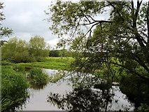 SJ5509 : Attingham Park, River Tern by David Dixon