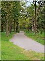 SJ5510 : Woodland Path at Attingham Park by David Dixon