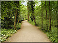 SJ5410 : Woodland Path at Attingham Park by David Dixon