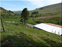 SJ0932 : Sheep and a large shed at Blaen-y-cwm by Richard Law