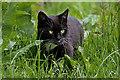 NT2318 : A black cat at Riskinhope Farm by Walter Baxter