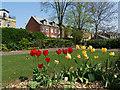 SE2918 : Tulips, Horbury Memorial Park by Stephen Craven