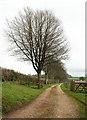 SX7958 : Drive to Stancombe House by Derek Harper