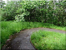 ST1599 : Bend in a path through Bargoed Woodland Park by Jaggery