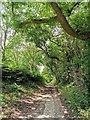 TQ3615 : Path near East Chiltington known locally as Ferrings by PAUL FARMER